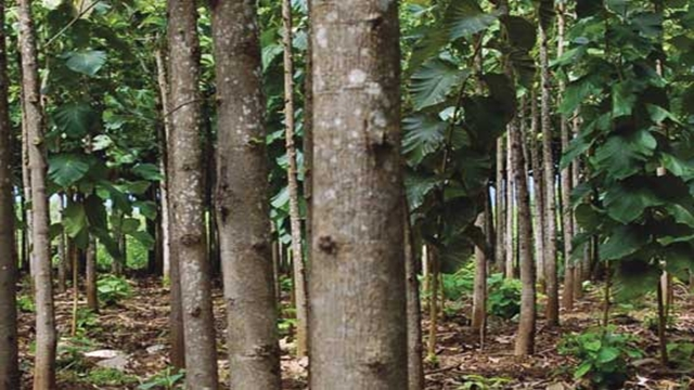 20 pc forestation by 2020: Minister