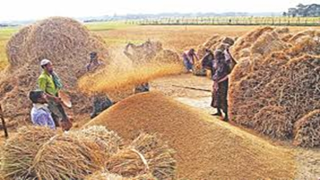 Nearly 2 cr tonne boro output this year: DAE
