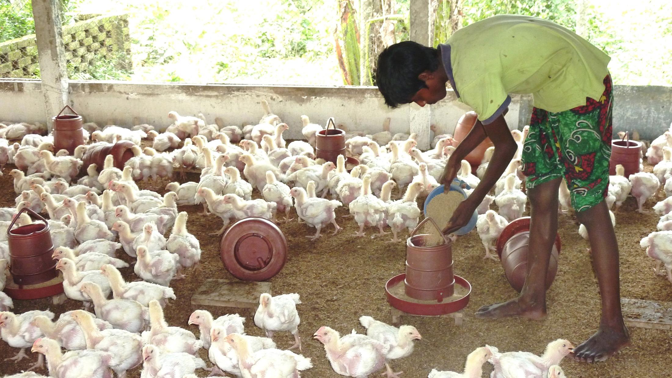 Poultry farmers seek suitable business atmosphere in Rajshahi